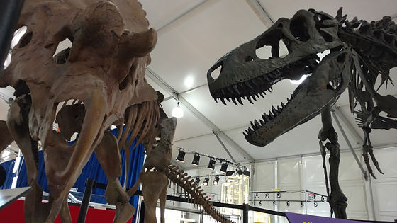 The 22nd St. Show runs 18 days ending on the same day as the TGMS Show. Make 22nd St. Show a top Tucson Gem & MIneral Show & you will not be disappointed. Fine jewelry, gemstones, minerals, trade show lights & dinosaurs are all sold at the Tucson 22nd St. Show.