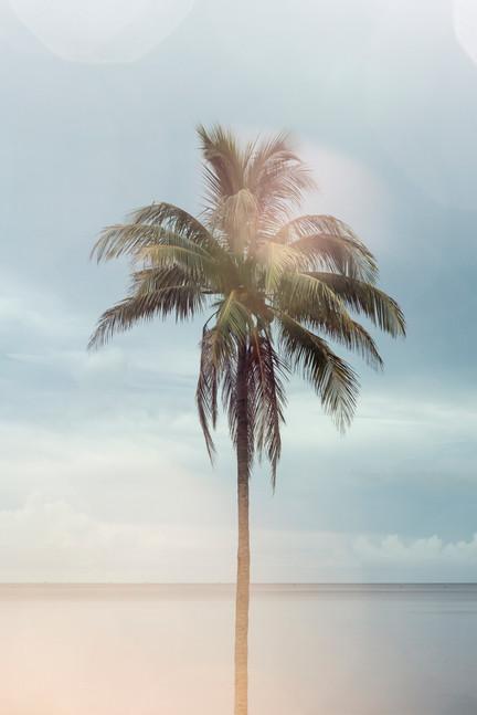 Lone Palm#009