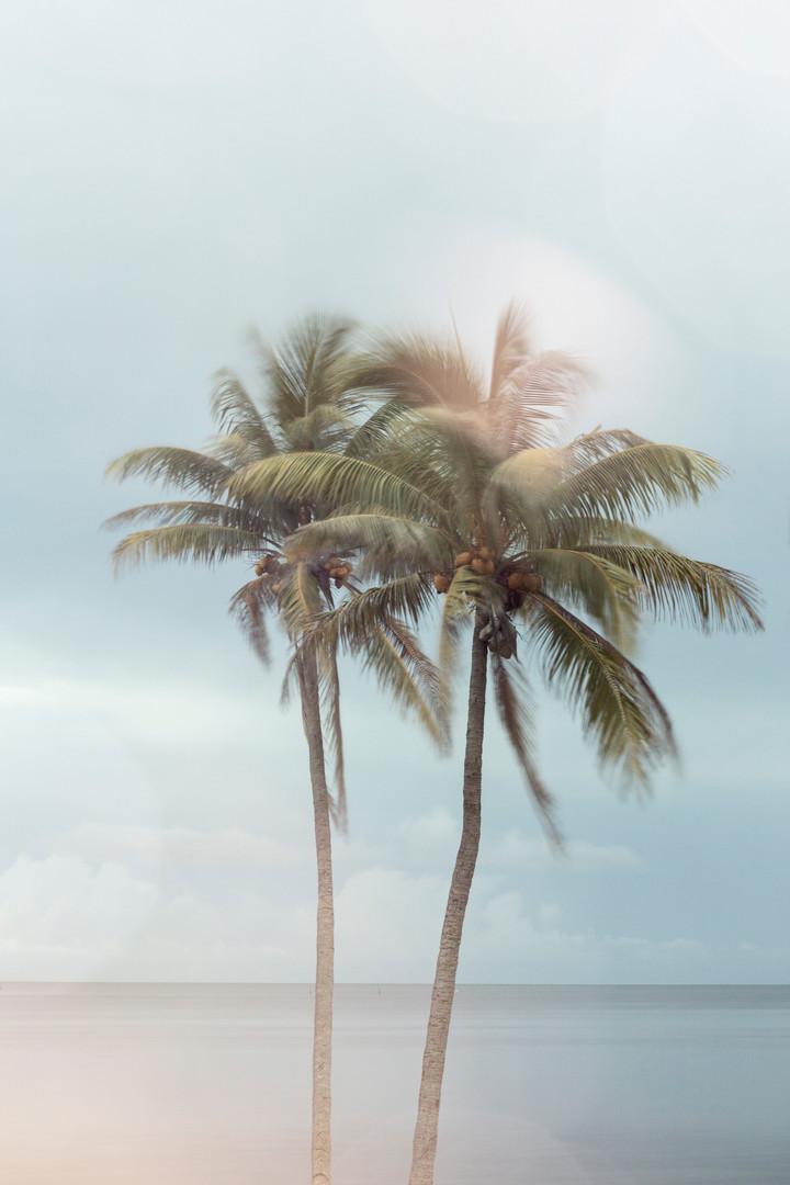 Twin Palms#016
