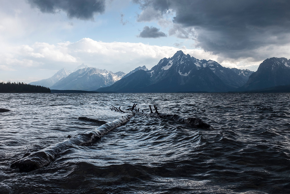 logs floating in lake with mountains in background