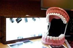 Dental Exhibit