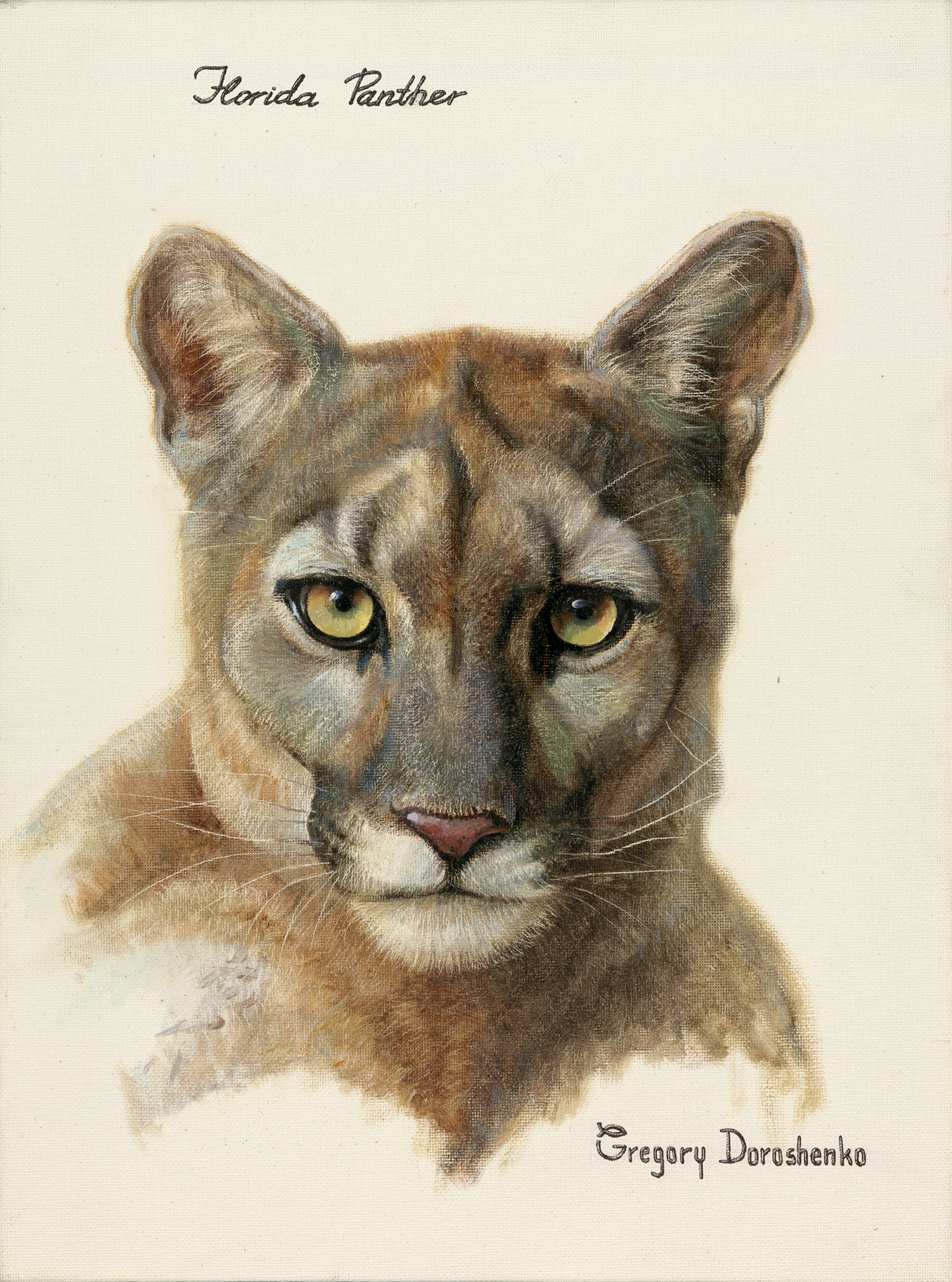 Florida Panther. Oil on Canvas. To buy a print, click below