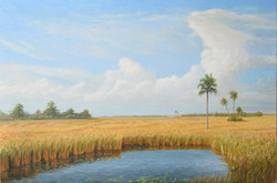 Everglades. Oil on Canvas. To buy a print, click below