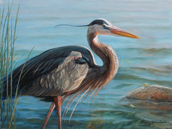 Blue Heron. Oil on Canvas. To buy a print, click below
