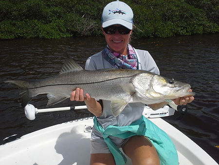 naples snook fishing