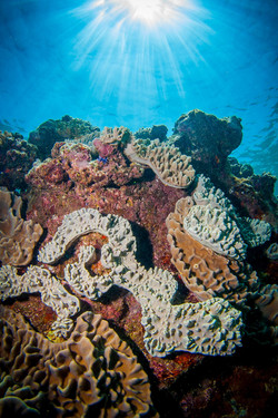 soft-corals-retracted.JPG