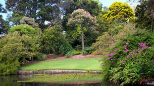 Royal Botanic Gardens - Nymphaea Lake