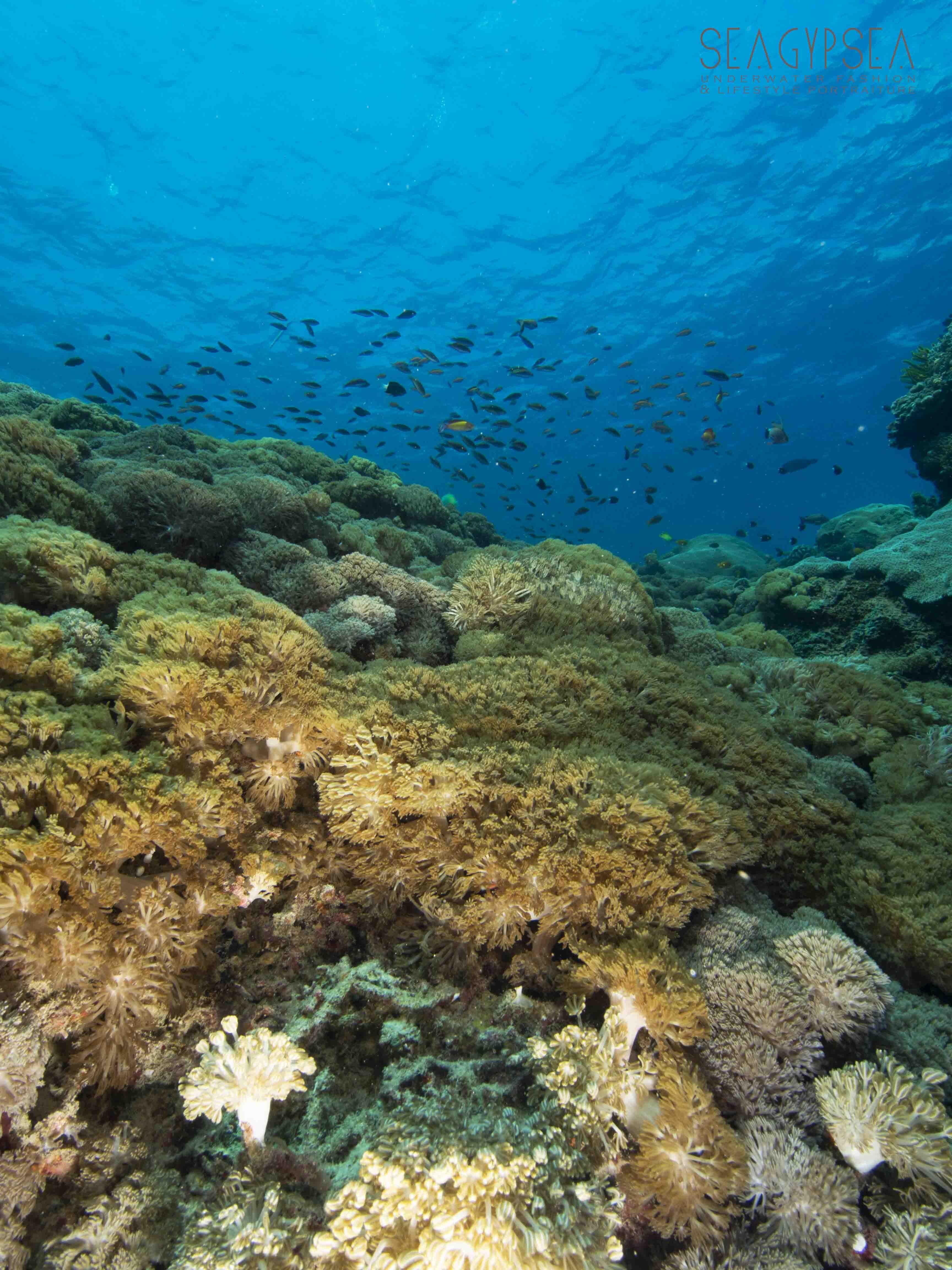 Underwater Travel PhotographyUnderwa