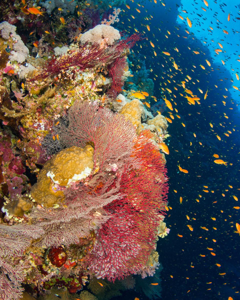 reef-wall.JPG