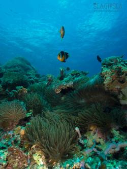 Underwater Travel Photography
