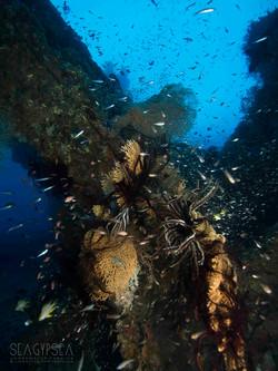 Seagypsea photograhy imagery