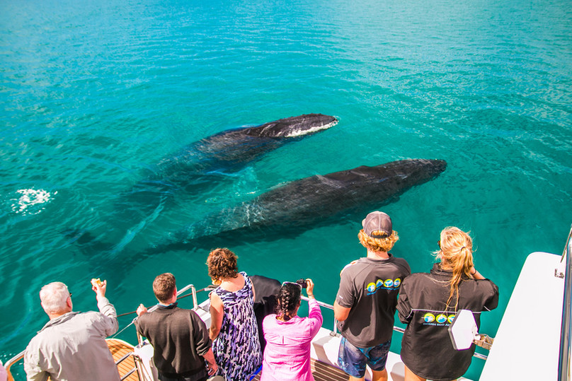Sunset Whale Watch Tour