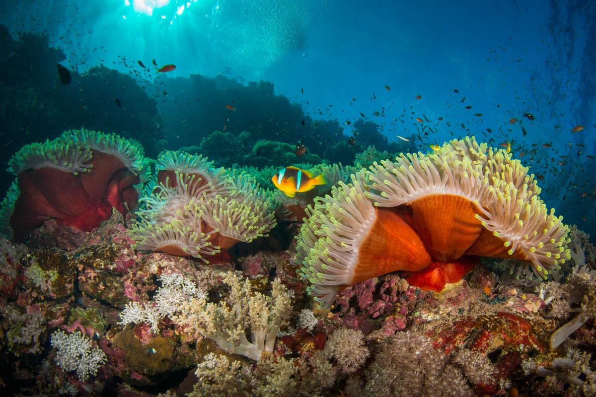 clownfish-and-anemone.JPG