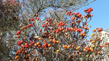 Natural bird feeders: wildlife friendly elements in Victoria gardens