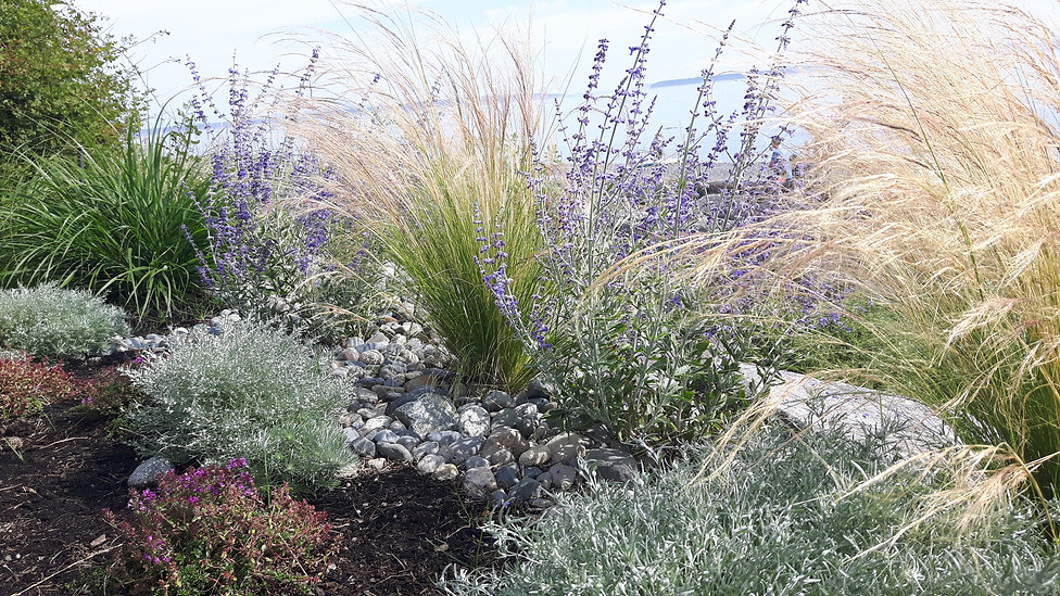 drought tolerant, sustainable garden design Victoria BC, pnw seaside planting.