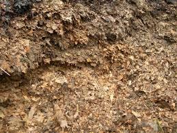 Leaf mulch in Victoria and Saanich