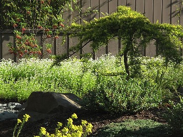 fully organic landscaping Victoria BC, landscape design project managment.
