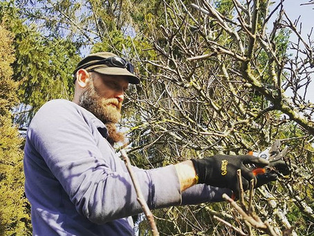 Fruit tree pruning time for Victoria BC