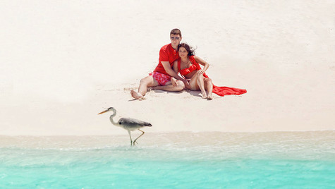 While on the beach make the bird be your companion