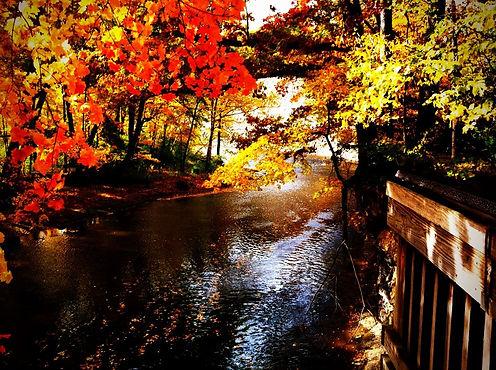 fall metro.jpg