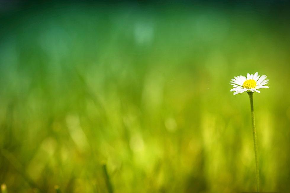 flower-thebeecam.jpg