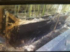 Removal Overgrown Planter.JPG