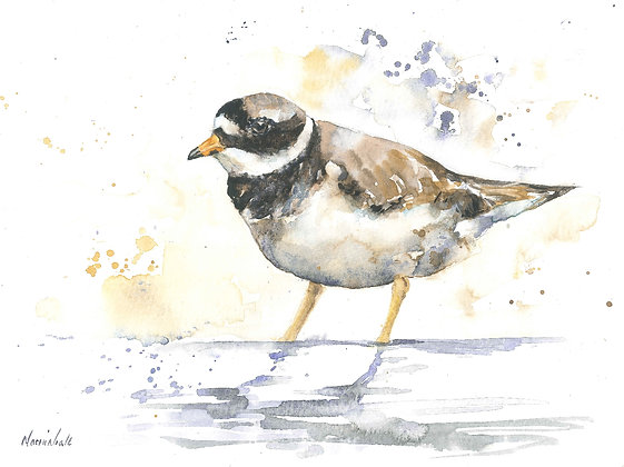 Plover Original Watercolour