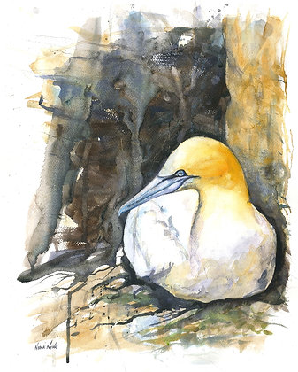 Gannet Original Watercolour