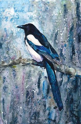 Magpie Fine Art Print