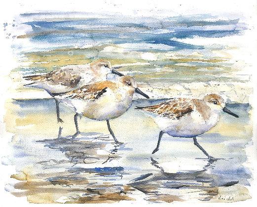 Sanderlings Original Watercolour