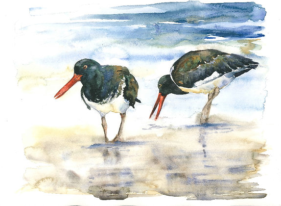 Oystercatchers Original Watercolour