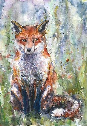 Sitting Fox Fine Art Print
