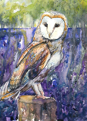 Barn Owl and Bluebells Print