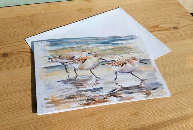 Sanderlings Greetings Card