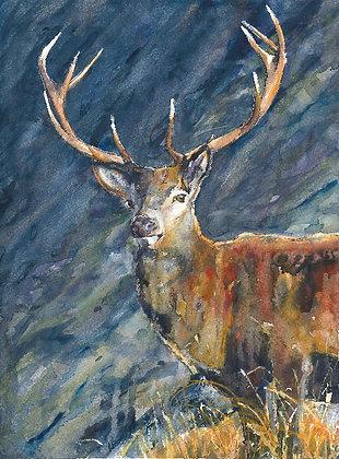 Stag on Hillside Original Watercolour