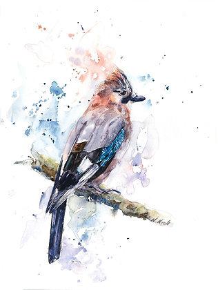 Jay Fine Art Print