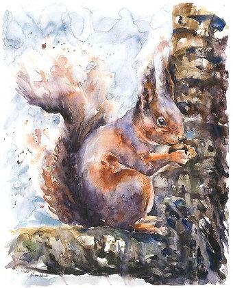 Squirrel Original Watercolour