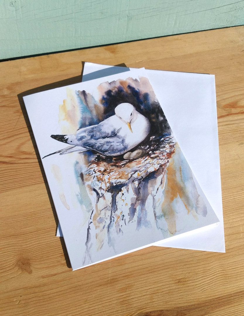 Kittiwake Nesting Greetings card. Naomi