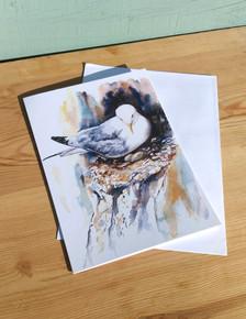 Kittiwake Nesting Greetings card. Naomi