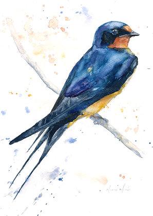 Swallow Fine Art Print