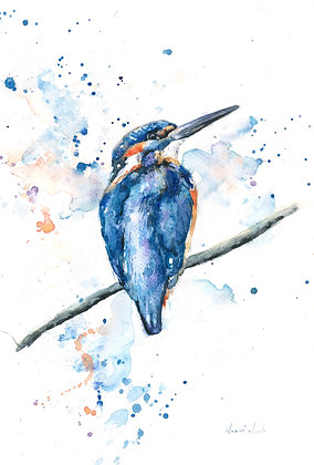 Kingfisher II Fine Art Print