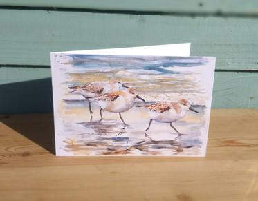 Sanderlings greetings card. Bird waterco