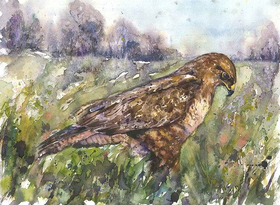 Buzzard Original Watercolour