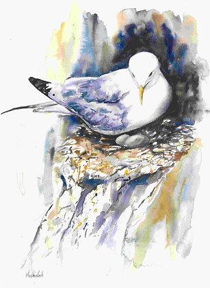 Kittiwake Nesting Fine Art Print