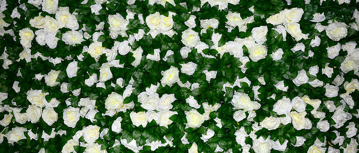 Secrecy Flower Wall Hire