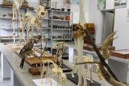 Laboratório de Zoologia