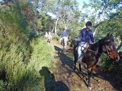 horse trecking