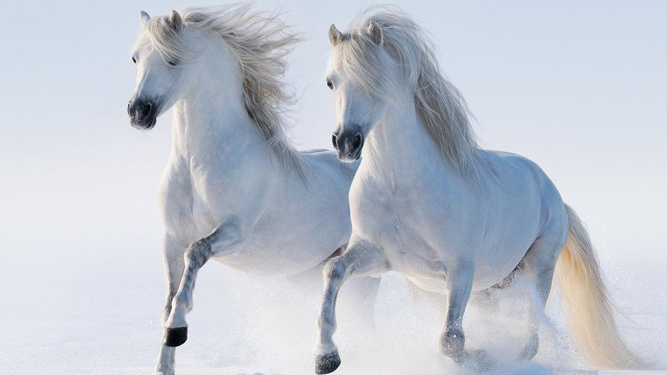 2_White_Horse_Running_Wallpaper.jpg