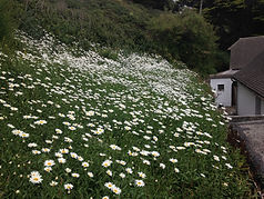 Ext flowers.jpg