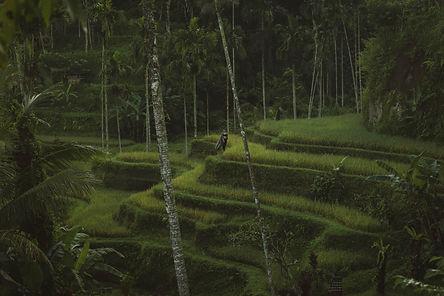 Kiriin Forest-53.jpg
